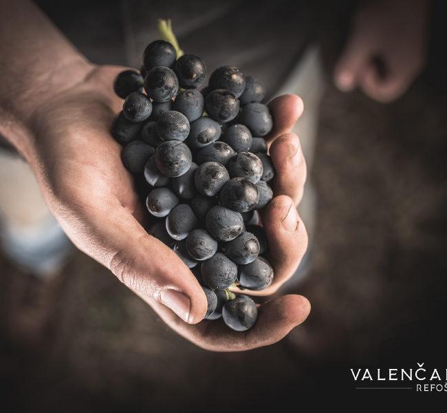 Valenčak wine branding